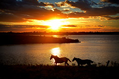 A dois grandes reservados (Eduardo Amorim) Tags: cavalos caballos horses chevaux cavalli pferde caballo horse cheval cavallo pferd cavalo cavall tropilla tropilha herd tropillas tropilhas 馬 حصان 马 лошадь crioulo criollo crioulos criollos cavalocrioulo cavaloscrioulos caballocriollo caballoscriollos pôrdosol poente entardecer poniente atardecer sunset tramonto sonnenuntergang coucherdesoleil crepúsculo anoitecer pelotas costadoce riograndedosul brésil brasil sudamérica südamerika suramérica américadosul southamerica amériquedusud americameridionale américadelsur americadelsud brazil eduardoamorim barragem açude barrage dam damm aguada diga