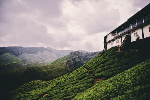 cameron highlands!