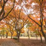 IMG_0209_211 代々木公園 HDR thumbnail
