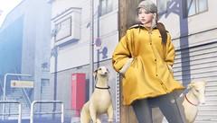 818 (Tomomi alpaca Homewood) Tags: amitomo taikou momento youi kustom9 cold morning dogwalking backdrop