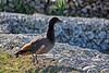 IMG_7903_qhdr (XimoPons : vistas 4.000.000 views) Tags: aves birds ximopons nuevazelanda newzealand oceania austral antipoda