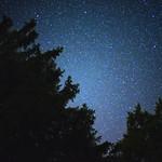 trees and stars thumbnail