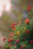 Happiness (Alejandro Ruiz Toro) Tags: 7dwf flora colores bokeh luz sun colors light sol flowers flores