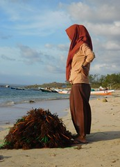 Lombok - village d'Ekas (mcbail) Tags: lombok ekas plage algues indonésie agaragar