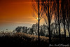 Burning Sky (Yarin Asanth) Tags: autumn sun sunset sundown black silhouettes trees yarinasanthphotography gerdkozikphotography winter sky orange yarinasanth gerdkozik gerdkozikfotografie gerdmichaelkozik