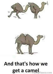 Where camels come from (FunnyFiasco) Tags: animals animal camel funny meme weird