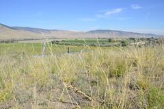 Weeds68 (NRCS Montana) Tags: weeds scenic farm