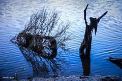 La gardienne de l'étang (didier95) Tags: forme insolite eau bleu femme tronc arbre audenge gironde fee fée imaginaire imagination