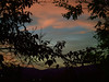 Sunset 20151008 (caligula1995) Tags: 2015 clouds plumtree sky sunset