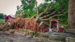 DSC_3407 (inkid) Tags: travel visit street simpangampat pulaupinang malaysia tree disaster