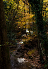 Moving Water (Andy & Helen :-) :)) Tags: helenholt wales water autumn waterfall nature leaves nik wrexham nantmill