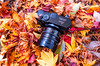 Buried in Dry Leaves (moaan) Tags: kobe hyogo japan jp camera gear equipment leicam type240 noctilux fallenleaves dryleaves autumn autumncolors autumnleaves fall fallcolors fallfoliage nature naturephotography leicaphotography leica leicax2