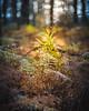 DSC_2044.jpg (ruud.snijders) Tags: forrest erks woods reigersbroek woodlands rozendaal bos fall herfst