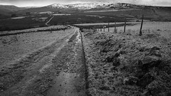 1920p 72dpi-3724-3 (R W Gibbens Photo) Tags: forestofbowland fells november lateautumn earlywinter latefall track path road hill blackandwhite lancashire england uk