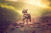 Con rizos y a lo loco! (MerSGarcía) Tags: pet pets petphotography petsphotography petphotographer petsphotographer retratodeanimales retratistaanimal retratistadeperrosespaña canonespaña mycanon canon5dmarkiii canon135mmf20l perros perro perrodeaguas caniche mixcaniche