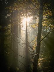 Telenature (Petr Sýkora) Tags: les podzim nature trees forest light sun dark morning shadows czech