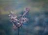 Beauty of a grey Day (ursulamller900) Tags: pentacon2829 wildemöhre daucuscarota seeds bokeh