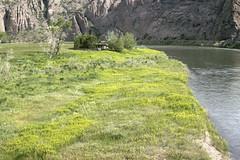 Weeds11.tif (NRCS Montana) Tags: weeds noxious leafyspurge creeks rivers water