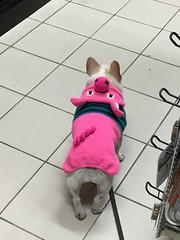 dolly stroll (helloflower!) Tags: baydundas canadiantire dog dolly toronto