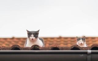 kittens (49)