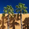 Sarasota shadows (Tim Ravenscroft) Tags: palms trees shadows wall sarasota florida hasselblad hasselbladx1d x1d