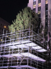 2017 Christmas Tree Rockefeller Center NYC 3635 (Brechtbug) Tags: 2017 christmas tree rockefeller center before lights 11112017 nyc 30 rock new york city standing up above ice rink with snow shoveling workers skating holiday decoration ornaments night lites light oversize load ornament prometheus gold mythological statue sculpture fountain fountains scaffolding scaffold pre thanksgiving