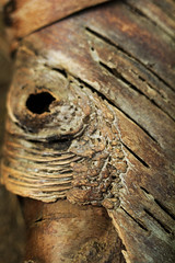 (Pandella Burns) Tags: amanda panda burns july 2016 canada ontario stonecliff driftwood campground camping camp nature outdoor tree bark brown texture