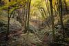 Hayedo de la Biescona (elosoenpersona) Tags: hayedo biescona sierra sueve colunga asturias elosoenpersona forest otoño fall autumn monte naturaleza nature wild fagus sylvatica