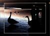 IMG_0613b (fotokunst_kunstfoto) Tags: silhouette silhouett silhouetten schattenbilder umriss kontur konturen schattenriss