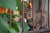 Where's the cat?|巷裡尋貓 (里卡豆) Tags: olympus penf 45mm f12 pro olympus45mmf12pro taiwan 台灣 cat 喵 貓 喵星人