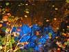 Autumn  Reflections (Ostseetroll) Tags: deu deutschland geo:lat=5418495996 geo:lon=1063383811 geotagged kirchnüchel schleswigholstein ukleisee herbst herbstfarben autumn autumncolours spiegelungen reflections