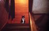 img098 (pon-ko) Tags: 弘前 hirosaki 猫 cat superiaxtra400 rollei35s