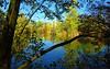 3196 Spiegel der Natur. Mirror of nature. (Fotomouse) Tags: fotomouse margrit flickr landschaft landscape weiher wasser bäume baum spiegelbild sräucher himmel sky