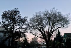 2017 YIP Day 339: Winter sky