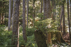 2009-08-17_11-27-52 East Sooke Park (canavart) Tags: temperaterainforest eastsookepark vancouverisland britishcolumbia bc canada forest rainforest trail ferns trees