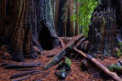 Muir Woods (suisun) Tags: muir woods redwood california