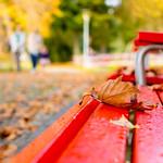 Autunno al parco thumbnail