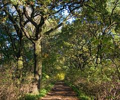Ścieżka spacerowa 82 (Hejma (+/- 5400 faves and 1,7 milion views)) Tags: zator stawy aleja spacerowa drzewa krzewy jesień