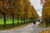 Allee in autmn park Kadriorg (AudioClassic) Tags: people colors photographythemes photography nopeople autumn colorimage day plant tree lushfoliage season forest woodland landscape nationalpark footpath parkmanmadespace september october branch leaf hiking shade comfortable goldcolored beechtree falling relaxation tranquilscene yellow orangecolor greencolor environment nature outdoors horizontal november estonia