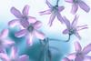 Dizziness (Hanna Tor) Tags: art color purple bokeh blue hannator nature light garden