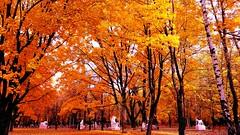 Beauty of autumn (loveguru741) Tags: autumn landscapes landscapephotography garden oldtrees yellow paris milan india beautiful amazing naturelovers nature naturefollowers natural nyc newyork recent new