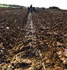 Plough a straight furrow at Funtington ploughing match (keithericfoote) Tags: ploughing straightfurrow farming oldtractor oldplough