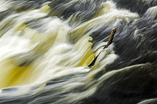 Stick stuck in Lower Tahquamenon Falls - 2