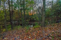 1338__0636FLOP (davidben33) Tags: brooklyn 718 ny quotnew yorkquot quotprospect parkquot autumn 2017 fall trees bushes leaves lake pets gooses ducks water sky clouds colors yellow green blue people quotstreet photosquot