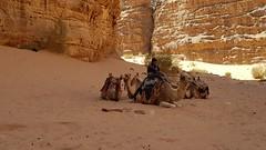 JORDANIA (Grace R.C.) Tags: jordania desierto desert wadirum camello camel animal arena sand gente people