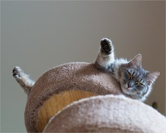 Toots on high (TheeErin) Tags: columbus ohio unitedstates toots cat