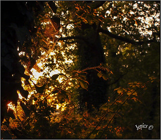 Sunlight In A Hedgrow..