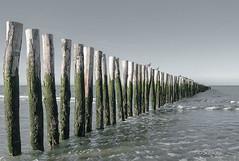 Les piquets en bois de la plage de Sangatte