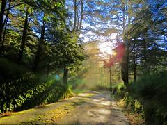 toward to light (oneroadlucky) Tags: nature landscape mountain forest path fog mist tree sunrise sunlight sunray sky 大雪山