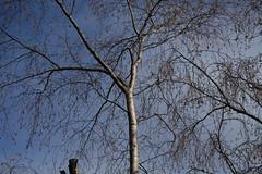 arbre nu (bulbocode909) Tags: valais suisse montchemin arbres nature montagnes automne bleu